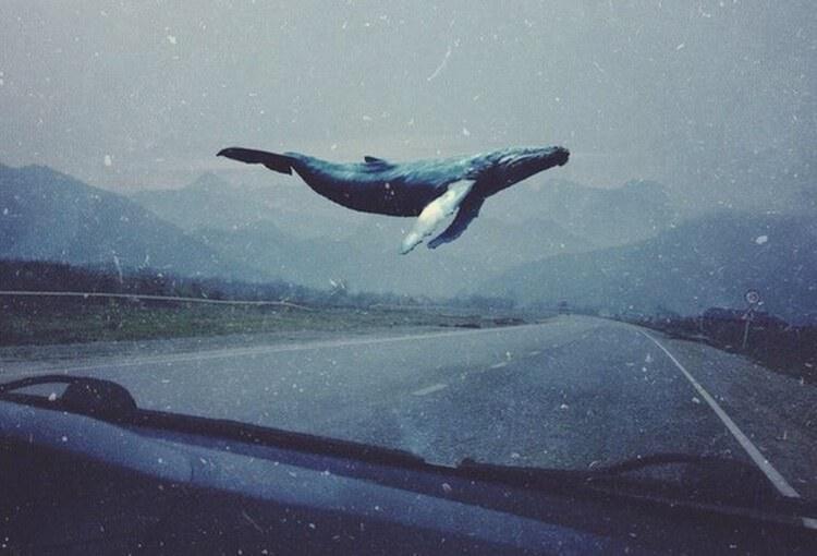 Синій кит — все, що вам треба знати про «групи смерті» в соцмережах