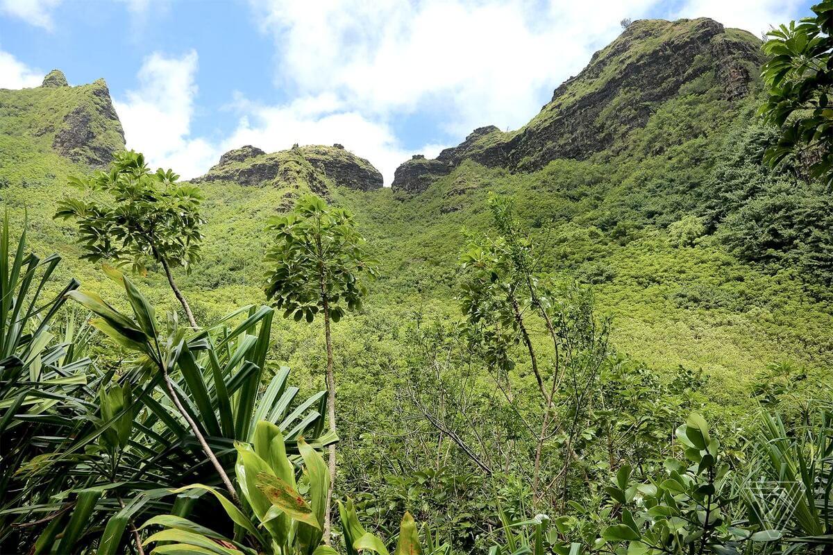 Як на Гаваях ботаніки шукають рідкісні рослини за допомогою дронів
