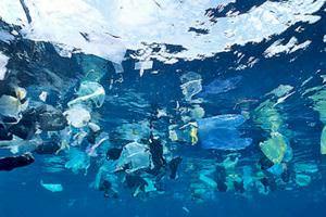 Життя Тайвань відмовляється від безкоштовних пластикових пакетів екологія новина сміття Тайвань у світі
