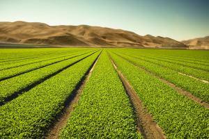 Життя Як дослідники шукають методи збільшення врожайності для боротьби з голодом Їжа новина сша
