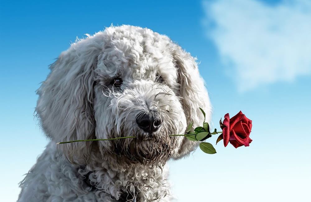 Вся правда про день Святого Валентина