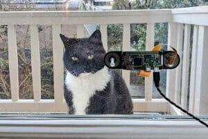 Технології Програміст розробив систему розпізнавання свого кота голландія новина штучний інтелект