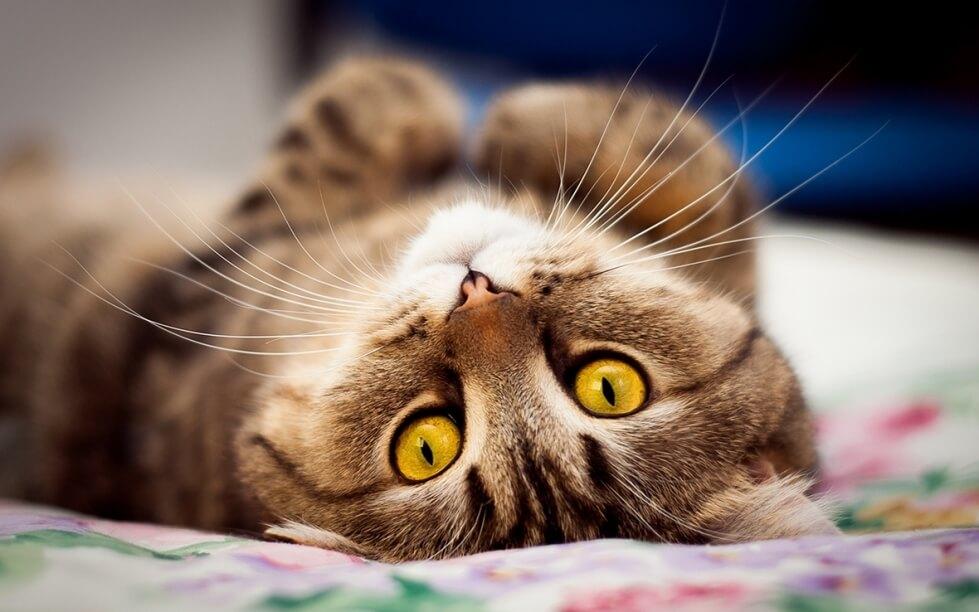Домашніх тварин Києва внесуть до онлайн-реєстру