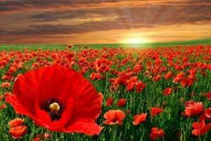 Життя День примирення, а не перемоги думкастаттяу світіукраїна
