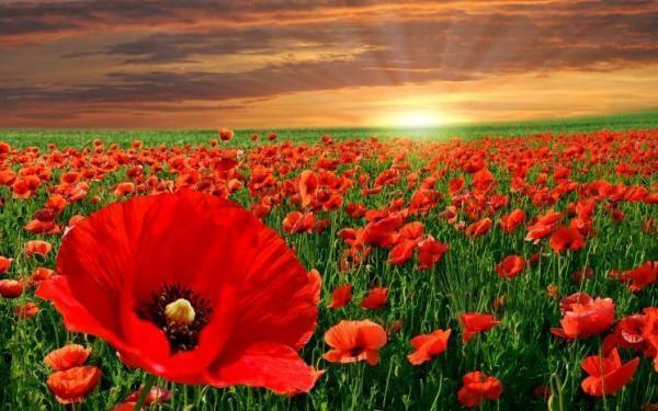 День примирення, а не перемоги