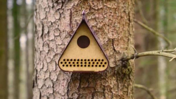 У Румунії створили шпаківню, що попереджає лісників про вирубку дерев