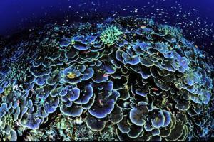 Життя На Мальдівах з'явилися перші коралові рифи, надруковані на 3D-принтері 3d екологія Мальдіви новина у світі
