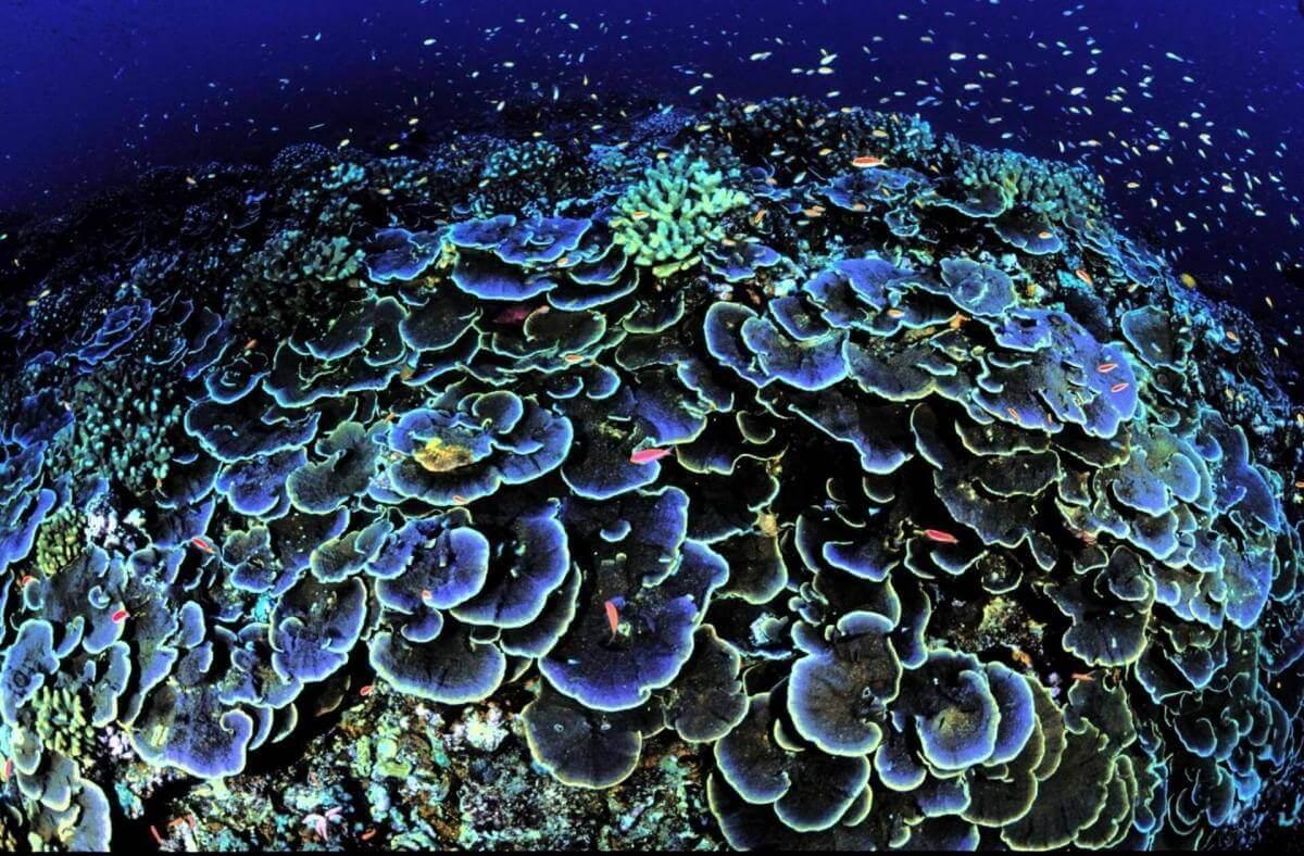 На Мальдівах з'явилися перші коралові рифи, надруковані на 3D-принтері