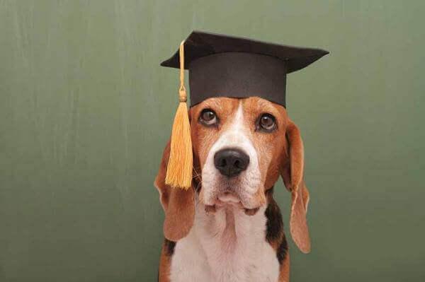 Собаки не такі розумні, як ми думали