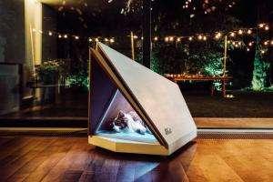Технології Компанія Ford створила будку для собак, що поглинає шум безпекановинасшау світі