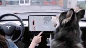 Життя У Tesla з'явився «Режим собаки» tesla авто електромобіль ілон маск