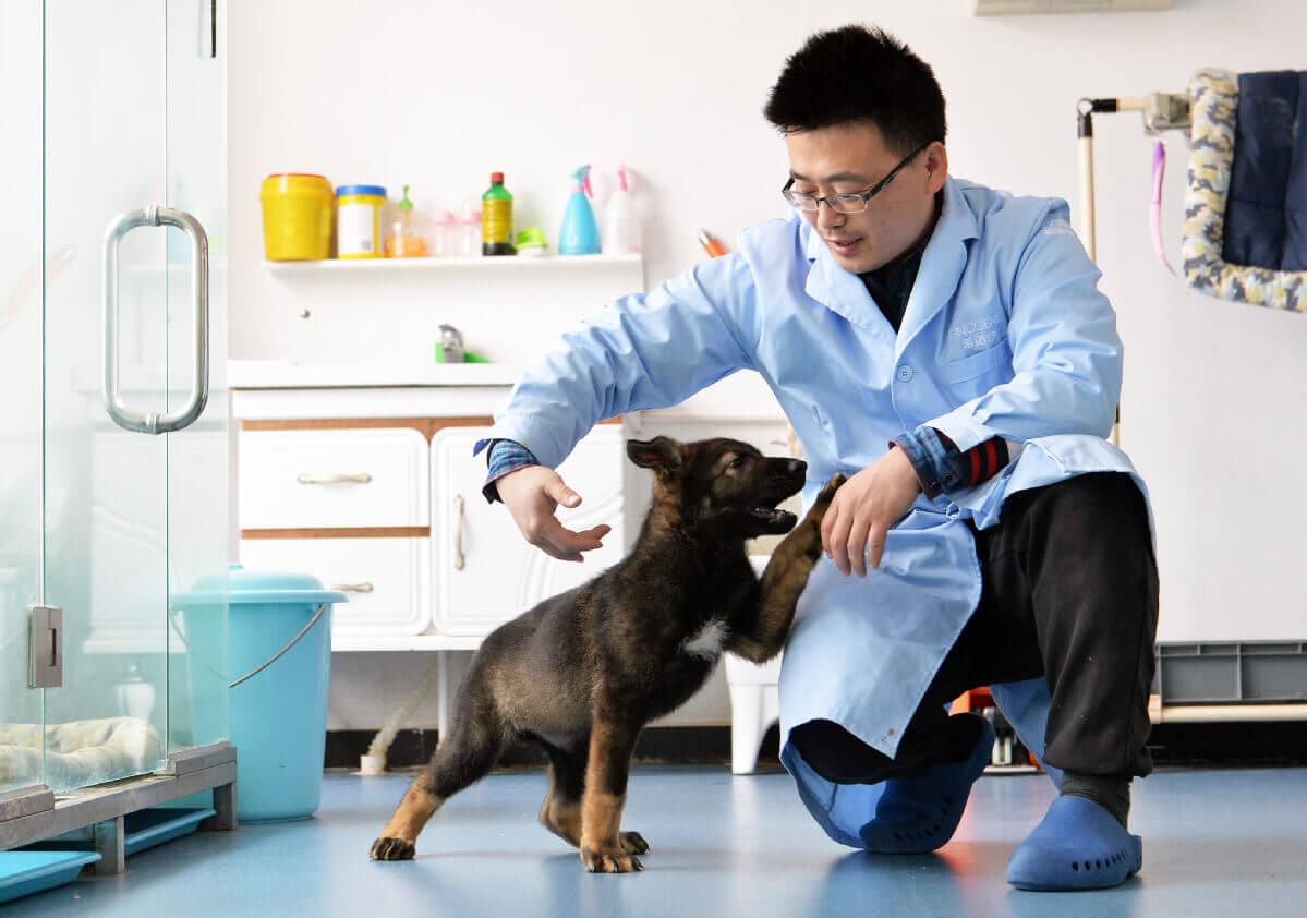 У Китаї вперше клонували поліцейського собаку