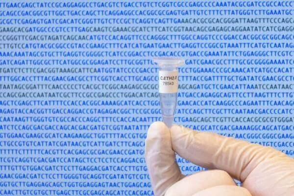 Комп'ютер вперше самотужки згенерував геном живого організму