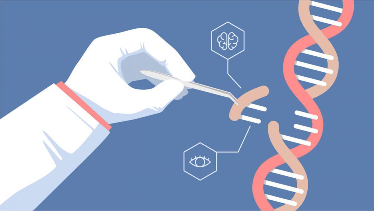 У США почали тестувати редагування людських генів