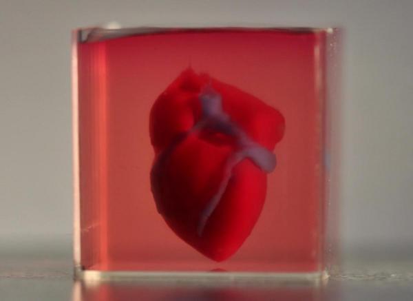 Учені вперше пересадили вирощені в лабораторії серцеві м'язи