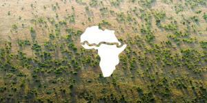 Життя В Африці висаджують «Велику зелену стіну» довжиною 8 тис. км африка екологія новина у світі