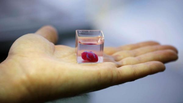 Ізраїльські вчені вперше надрукували штучне серце з клітин пацієнта