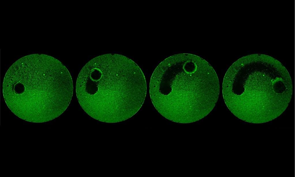 Мікророботи можуть замінити зубну щітку