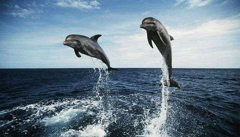 Дельфіни заводять друзів за інтересами — як і люди