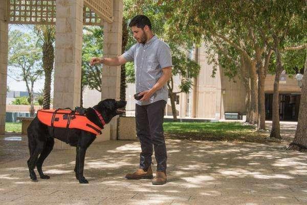 Новий жилет для собаки дозволить керувати ним за допомогою дистанційного пульта