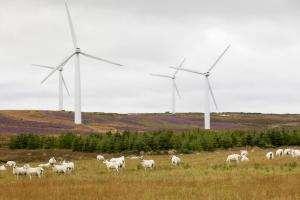 Життя Виробленої в Шотландії вітряної енергії вперше вистачить на всі домогосподарства країни британія екологія енергетика новина у світі шотландія