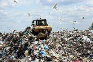 Життя Сортування сміття: як, навіщо та скільки можна заробити? екологія поради сміття стаття