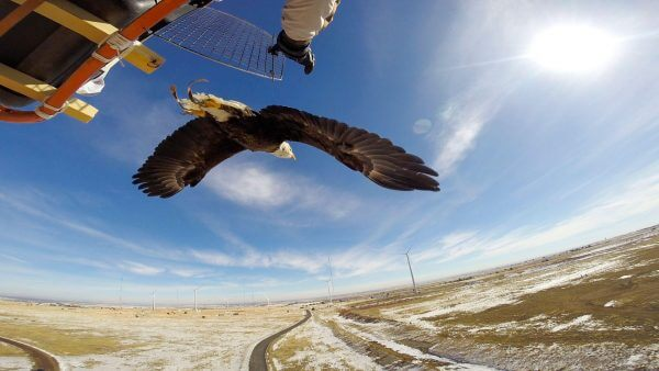 Офшори, села й мертві птахи: як найбільший у світі вітряк змінює альтернативну енергетику