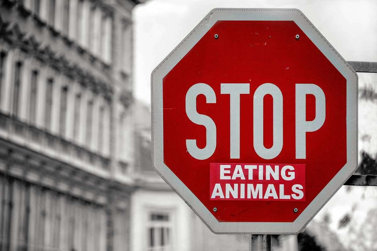 Їсти м'ясо чи ні? Чому споживання м'яса шкодить планеті