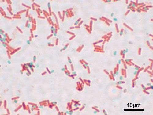 Бактерії