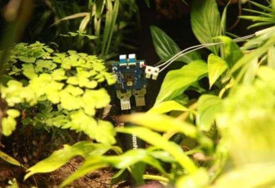 Технології Посміхнись. Рослина вперше зробила селфі екологія зелена енергетика клімат новина у світі
