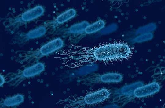 Життя Бактерії змінюють форму, аби уникнути антибіотиків – дослідження дослідження здоров'я медицина наука новина