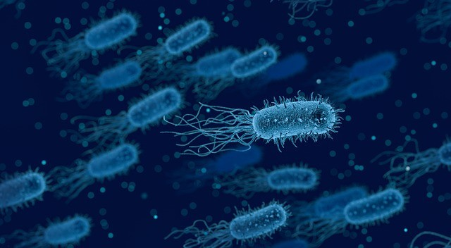 Бактерії змінюють форму, аби уникнути антибіотиків – дослідження