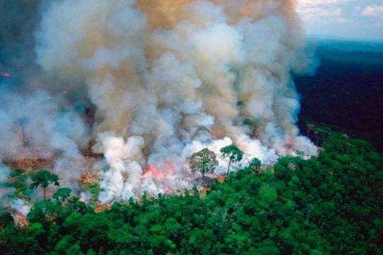 Життя Екоцид на краю Амазонки. Лісові пожежі знищують цілі екосистеми глобальне потепління екологія новина у світі