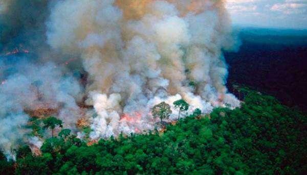 Екоцид на краю Амазонки. Лісові пожежі знищують цілі екосистеми
