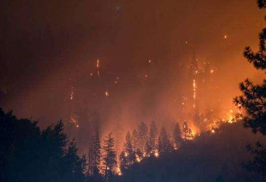 Технології Вчені розробили спеціальний гель, який може зупинити лісові пожежі екологія новина сша у світі