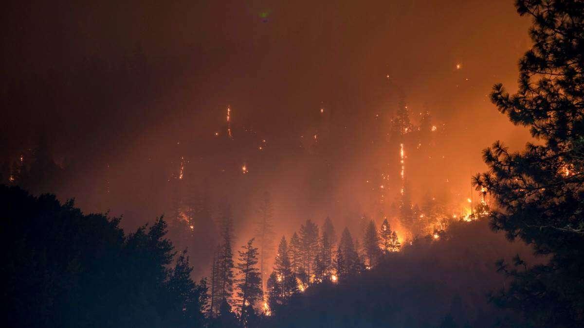 Вчені розробили спеціальний гель, який може зупинити лісові пожежі