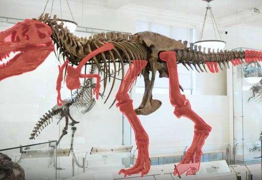 Життя Як вчені розв'язували головоломки динозаврів (відео) embed-video відео динозаври