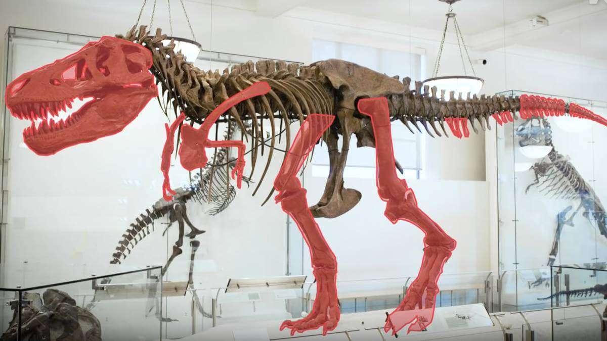 Як вчені розв'язували головоломки динозаврів (відео)