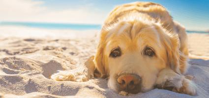 Дослідження: крик може стати причиною стресу у собаки
