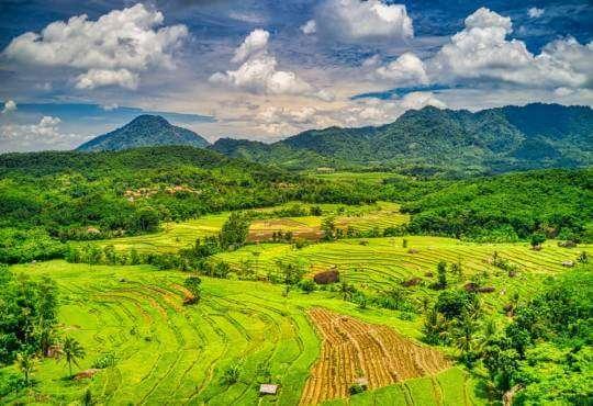 Життя Супердерева, що врятують наш клімат: Індонезійська Різофора екологія клімат стаття