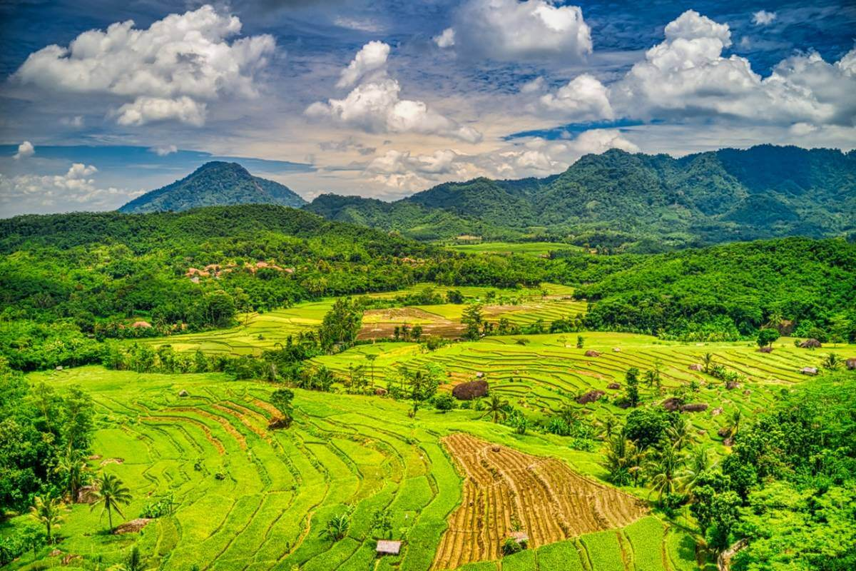 Супердерева, що врятують наш клімат: Індонезійська Різофора