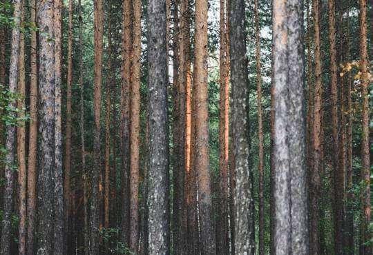 Життя Як бразильський горіх рятує клімат, створюючи опади бразилія екологія клімат природа стаття