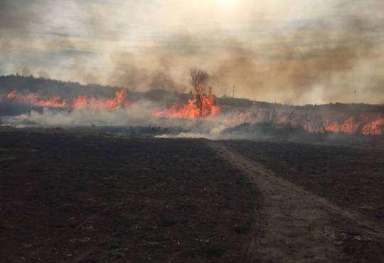 Життя Чому не можна палити сухе листя й траву безпека екологія здоров'я поради стаття україна