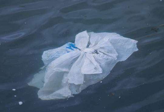 Життя Про що говорять набиті пластиком шлунки мертвих китів? екологія пластик природа стаття