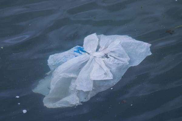 Про що говорять набиті пластиком шлунки мертвих китів?