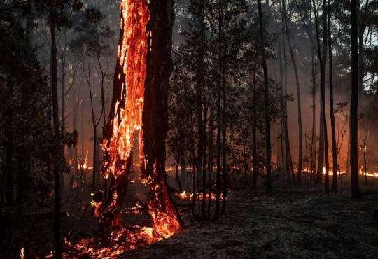 Життя Все, що треба знати про масштабні пожежі в Австралії австралія безпека екологія у світі