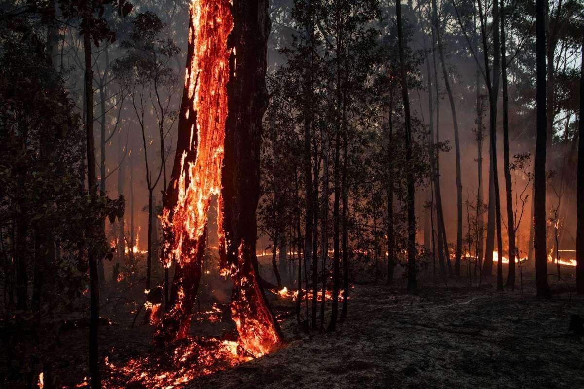 Все, що треба знати про масштабні пожежі в Австралії