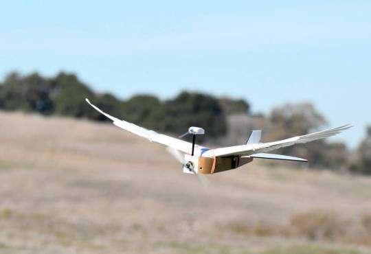 Технології Як виглядає перший у світі робот-голуб? новина роботи сша