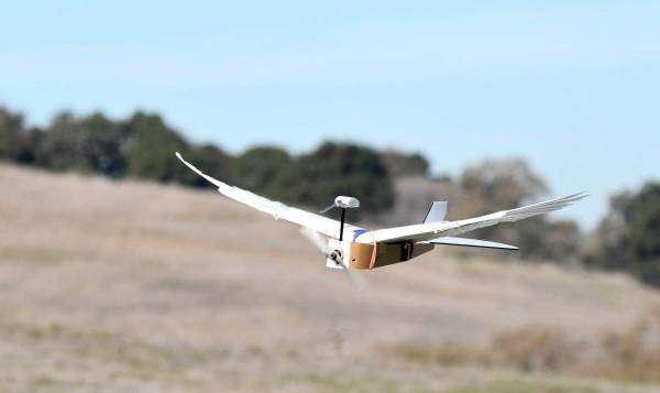Як виглядає перший у світі робот-голуб?