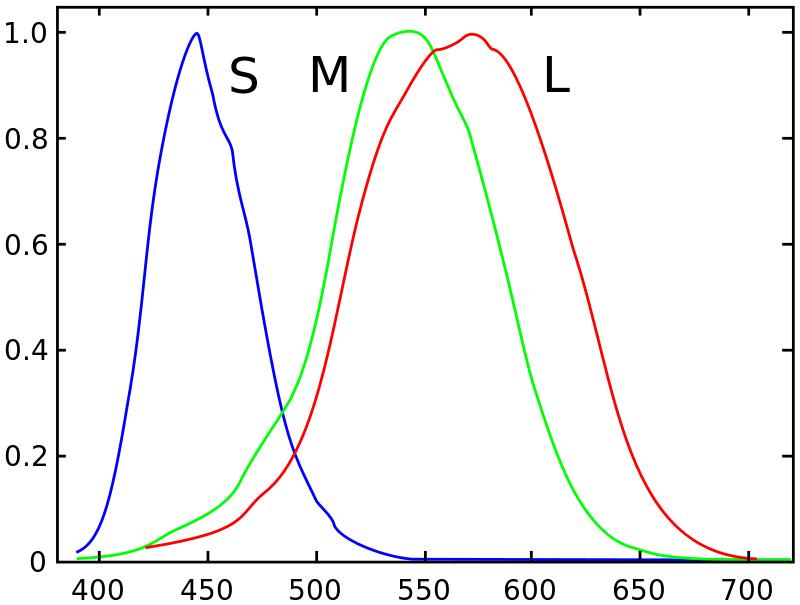Графік чутливості трьох типів колбочок, залежно від довжини хвилі в нанометрах